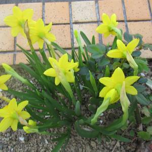 春の歌「風さんこっそり」~♪