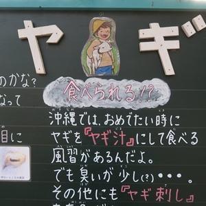 久々の函館旅行3 立待岬、函館公園と散策して夜は根室花まるのお寿司