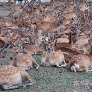 夏の奈良旅行 鹿だまりと天極堂の葛スイーツを堪能する