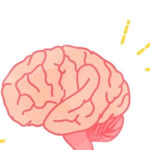 生後の発達と脳