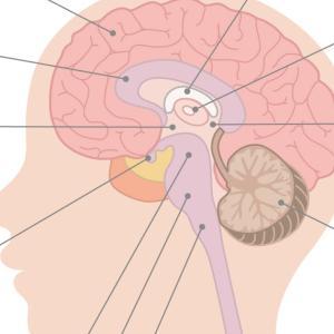 運動発達 頭‐尾の原則