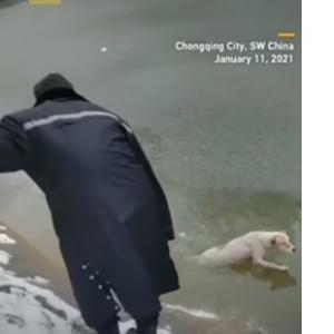 野良犬が凍った川に落下、警備員達がわんちゃんをレスキュー!