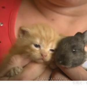 ネコちゃんの養子になった赤ちゃんうさぎ