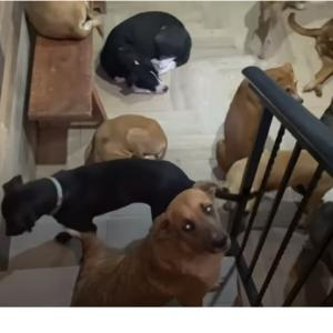 ハリケーンで300匹以上の犬を自宅に避難させた男性