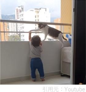 赤ちゃんを命がけで守ろうとするネコのお兄ちゃん