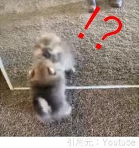 子犬が初めて鏡で自分を見た瞬間♪反応が可愛すぎ!