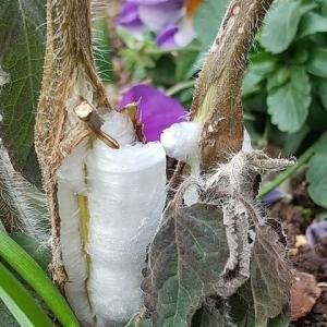 氷の花 ホワイトガーデン