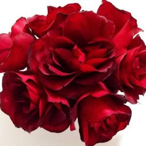 真紅のバラとアナベルのドライフラワー