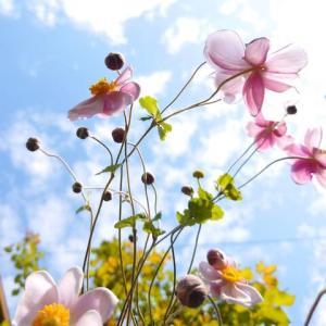 花が次々咲いていますよ~ஐ・:*:・✿💕