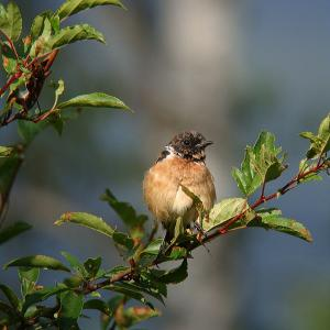 幼鳥たちの夏 2 ・・・
