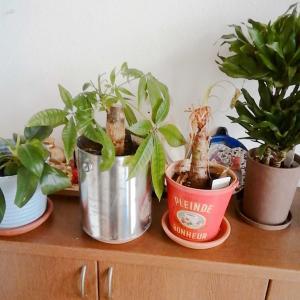 観葉植物(^。^)y-~