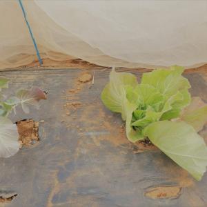 畑仕事から学ぶこと。成長の速度は人も野菜もそれぞれ。