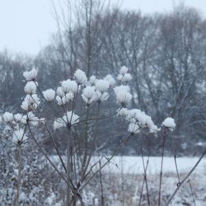 雪の積もった日、庭に迷い込んだ鹿。