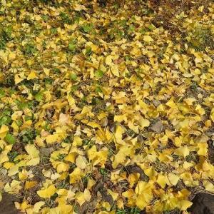 黒尊渓谷の紅葉と森のコテージ