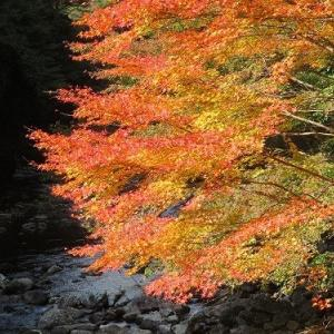 権現山と紅葉