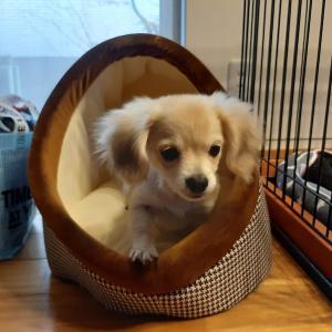 ELMO徹底分析|愛犬のドッグフードはこれ!|チワックス