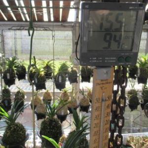 真冬の陽射しが入る温室