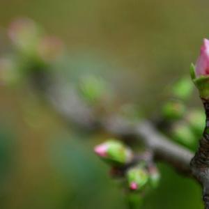 【春を待ちわびて】季節の変わり目に気をつけよう