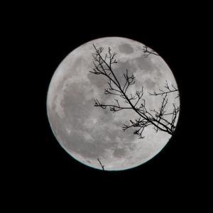 月と植物の関係。満月は地上、新月は地下にエネルギーが向かう
