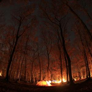 冬のソロキャンプ・森の中