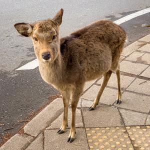 古都・奈良を巡る