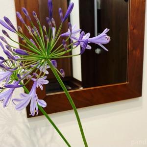 自宅の庭に咲いている2種類の花を、フラワーベースに飾りました