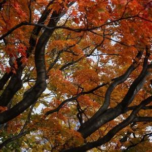 北海道の秋はもう終わりを迎えそうです。