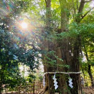 ☀️龍神がだいすきな神社で日光浴☀️