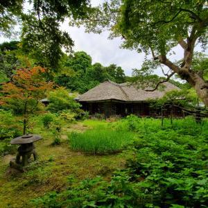 北鎌倉で鎌倉温野菜ランチ。浄智寺で散歩。
