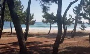 ビーチの散歩(軽快なジャズ)[ビーチ、日当たりの良い、潮風]