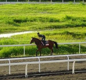 早朝サイクリングで馬を見る