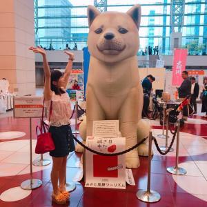 #秋田県 の #秋田犬 の #巨大スポット #横浜 #みなとみらい #クイーンズスクエア #犬