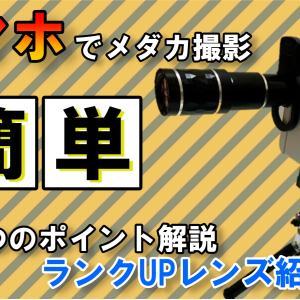 【メダカ撮影のコツ伝授】スマホで簡単・キレイにメダカを撮影する方法!