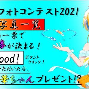 【優勝は誰だ!!!】メダカフォトコンテスト2021~すばらしいメダカの写真がたくさんありますよ~