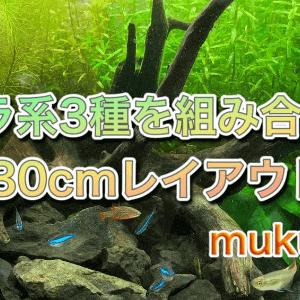 ロタラワリッキーを使った30cm水槽立ち上げの手順や使った道具【mukuta作】