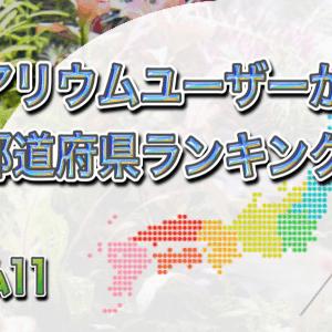 アクアリウムに興味がある都道府県ランキング!アクアリウム人口が多いのはどこ?