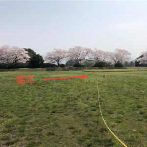 平城京の跡地で花見&放牧