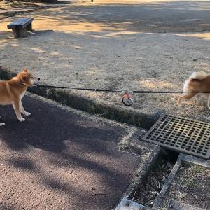 1.2mリードから1.6mへ - New leash is a bit longer