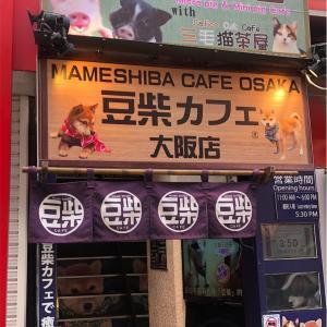 豆豚&猫カフェ - Micro Pig Cafe