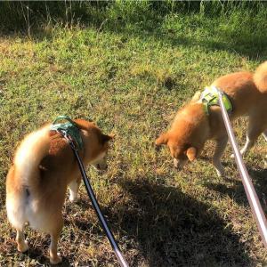 犬を棒でたたくなんて - How Dare She Hits Her Dog with a Cane