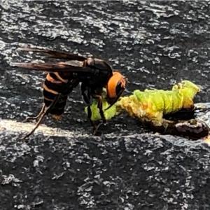 危険!スズメバチと草刈り - Wasp Is Dangerous, MAX