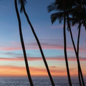 ハワイ コナコーヒーの特徴をざっくり解説!おすすめの選び方もご紹介