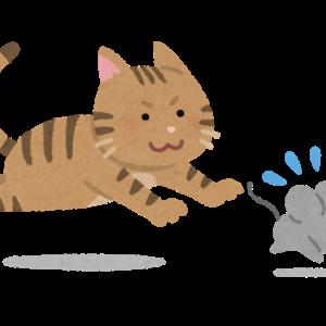 猫の強制ギブス
