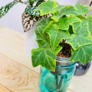 最近の植物事情について