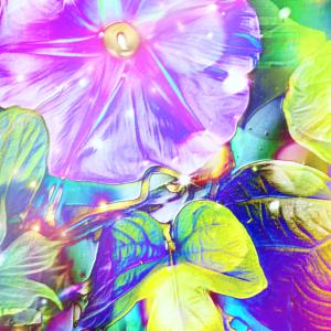 作品: 花プリズム閃光 Flower prism flash : 戒's gallery