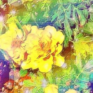 作品: 黄色く咲花 Yellow bloom : 戒's gallery