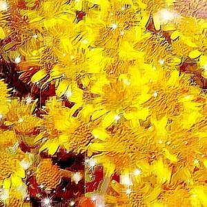 作品: 花達 秋風の庭 Flowers Autumn wind garden : 戒's gallery