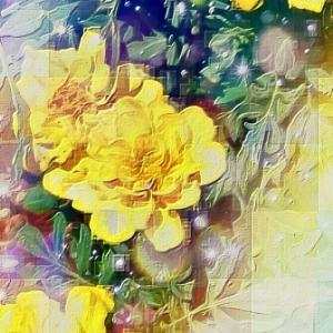作品: 虹 庭に咲く黄色い花 Rainbow.  Yellow flowers blooming in the garden : 戒's gallery