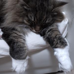 とろける猫の前には&子猫のころ