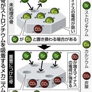 放射性ストロンチウムを豚骨ガラに吸着させて除去 原子力機構と東大が開発 ー東京新聞